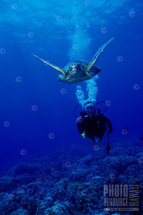 A woman scuba dives along side a Green Sea Turtle (Honu)in Hanauma Bay, Oahu.