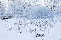 Zugefrorener Teich mit Rohrkolben, Winter, Schnee, Eis, Winterlandschaft, Winterstimmung, winterlich, eisig, kalt, snow