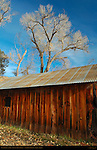 Cottonwood and Mill, Crescent Moon Ranch, Red Rock Crossing, Sedona, Arizona