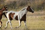Horses running in South Dakota