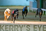 TOP DOG: Brogan Stranger no.1 winner of the Tullymurry Act\Slip The Lark Kingdom Derby Final at the Kingdom Greyhound Stadium on Friday 20th of December.