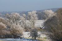 Verschneite Wiesenlandschaft, Wiesen, Weiden, Knick, Knicks, Hecke, Hecken, Knicklandschaft, Wintereinbruch im November, Deutschland, Schleswig-Holstein