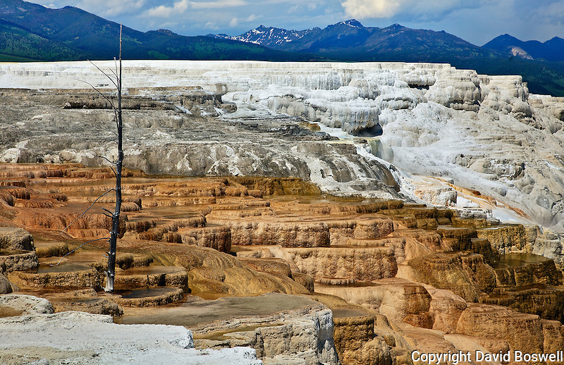 Mammoth Terraces, at Mammoth Hot Springs in northwestern Yellowstone National Park.