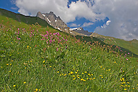 Bergwiese am Hochtannbergpass, Hochtann-Bergpass, Vorarlberg, Allgäuer Alpen, Österreich
