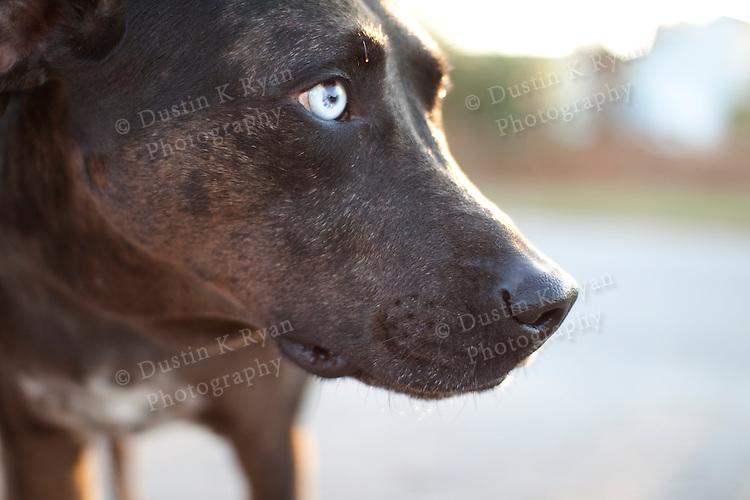 Black dog with white eyes