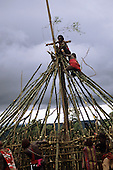 Lolgorian, Kenya. Siria Maasai moran men building the frame of the magic house; eunoto coming of age ceremony.