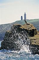 Europe/France/Bretagne/22/Côtes d'Armor/Cap Frehel: Cormorans  en fond le cap avec son phare [