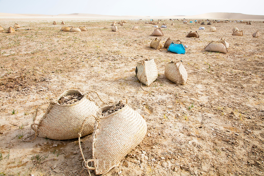 Chad (Tchad), North Africa, Sahara, Borkou District, Bags filled with salt crust; the salt will be used by camels.