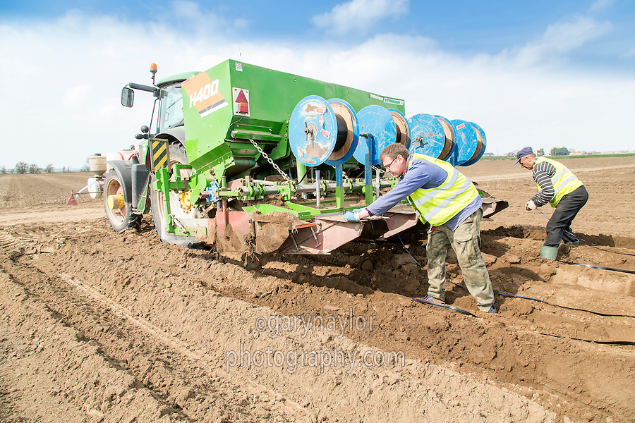 Planting Scoth Maris Piper and laying drip tape - Lincolnshire, April