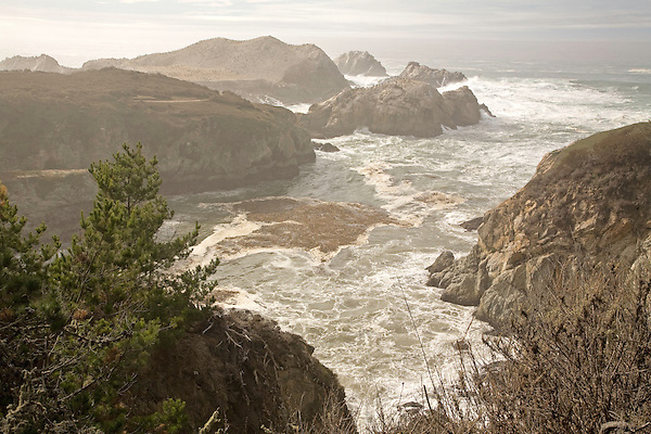 Point Lobos, 2007.
