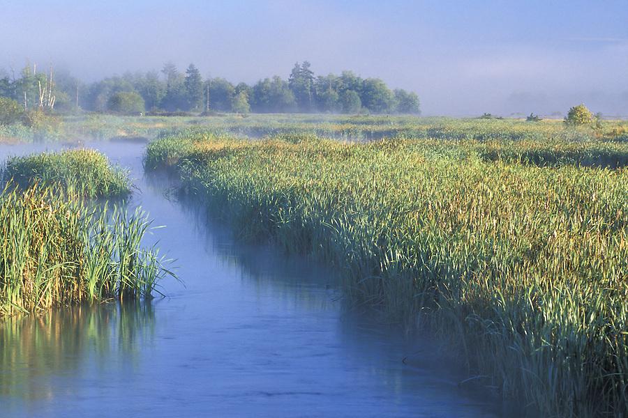 Estuary lagoon, Spencer Island, Everett, Snohomish River Estuary, Washington