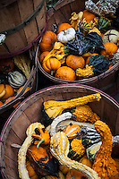 "Baskets of decorative gourds shout ""Autumn!"" at a roadside stand along a northern Utah two lane."