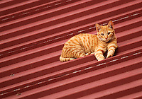 Brown cat sitting on the slope of a roof.