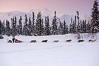 Ramy Brooks sled dog team on trail near Finger Lake Chkpt 2006 Iditarod Finger Lake Alaska Winter