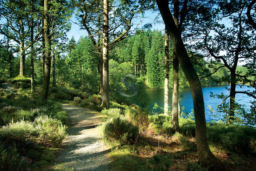 Loch Ard Forest beside Loch Ard, Loch Lomond and the Trossachs National Park, Stirlingshire