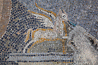 Detail of winged horse spurting water from the Roman mosaic of Diana and her nymph surprised by Actaeon while bathing, 3rd century AD, from the House of the Procession of Venus, Volubilis, Northern Morocco. Volubilis was founded in the 3rd century BC by the Phoenicians and was a Roman settlement from the 1st century AD. Volubilis was a thriving Roman olive growing town until 280 AD and was settled until the 11th century. The buildings were largely destroyed by an earthquake in the 18th century and have since been excavated and partly restored. Volubilis was listed as a UNESCO World Heritage Site in 1997. Picture by Manuel Cohen