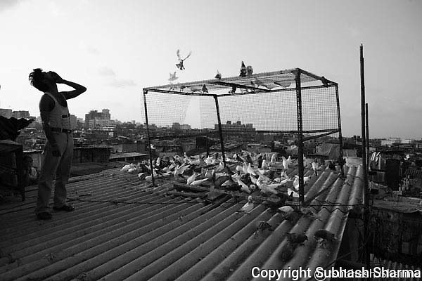 The Territory of Joy:Poor Mumbaiker's on their day off.