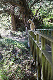 USA, California, Big Sur, Esalen, a woman peers over a walking bridge down to Hot Springs Creek below, the Esalen Institute