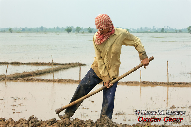 Hoeing Field For Planting Rice