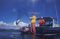 Sport fishermen netting a Silvere salmon, (Oncorhynchus kisutch) also know as a Coho salmon whiloe fishing in the Strait of Juan DeFuca near Sooke, British Columbia.