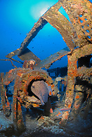 Mediterranean moray, Muraena helena, inside the submarine wreck of Le Rubis, 130 feet ( 40 meters ) depth. sunk on purpose on January 31st, 1958 as an artificial reef, Saint Tropez, France, Mediterranean Sea