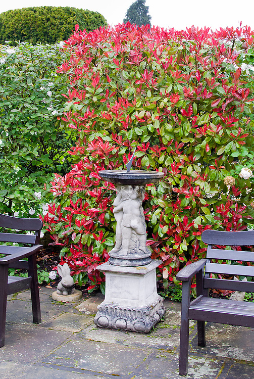 Two garden benches and cherub ornamented sundial backed by different kinds of hedges in spring