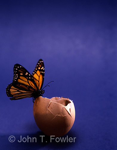 Monarch butterfly special effect