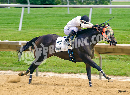 Stourbridge Lion winning at Delaware Park on 6/20/16