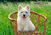 Marek, ANIMALS, REALISTISCHE TIERE, ANIMALES REALISTICOS, dogs, photos+++++,PLMP3193,#a#, EVERYDAY