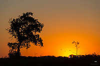Sun sets over the horizon.  View from the Cuiabá River, The Pantanal, Brazil.