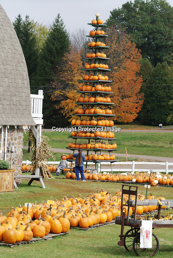 Colorama is the term used to describe the autumn changing of color on leaves throughout the USA. It's also a time for fall rides in antique and classic automobiles, pumpkin festivals, and pumpkin sales.
