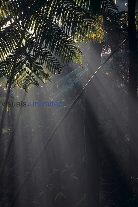 Smoke filtering through rainforest, Hawaii, USA.