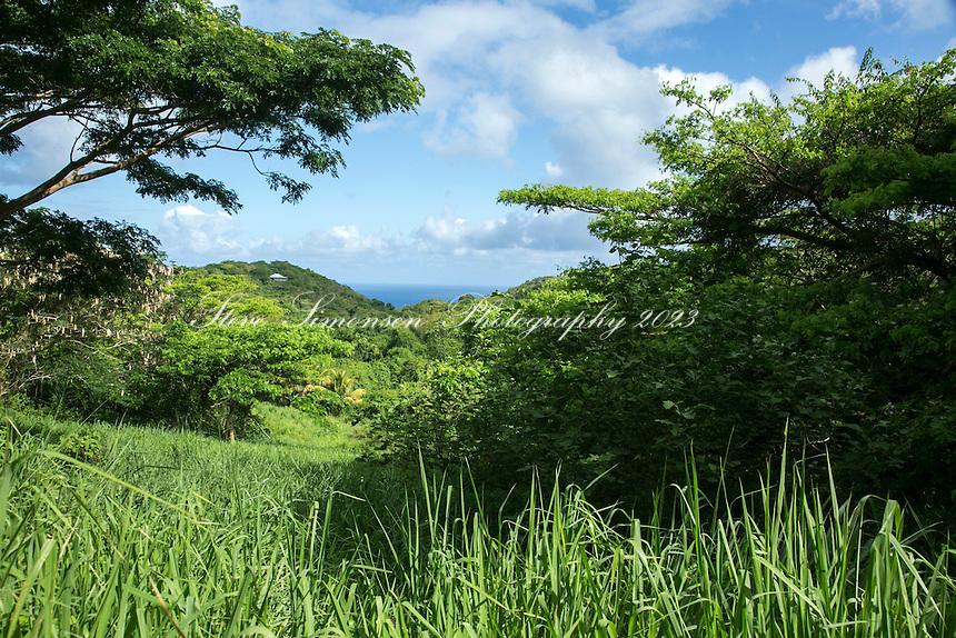 Ridge to Reef Farm<br /> St. Croix<br /> U.S. Virgin Islands