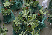Rio de Janeiro, Brazil. Carnival: samba school in costumes representing rainforest trees and plants.