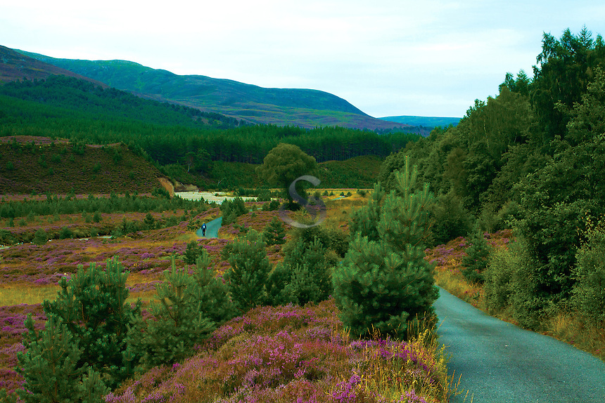 Walking through Glen Feshie, Cairngorm National Park