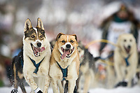 Warren Palfrey's lead dogs head down the chute at the restart of the 2008 Iditarod Sled Dog Race at Willow, Alaska