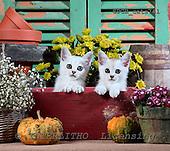 Xavier, ANIMALS, cats, photos+++++,SPCHCATS741,#a# Katzen, gatos