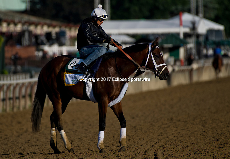 ELMONT, NY - JUNE 09: Hollywood Handsome during morning workouts in preparation for the Belmont Stakes at Belmont Park on June 9, 2017 in Elmont, New York (Photo by Scott Serio/Eclipse Sportswire/Getty Images)