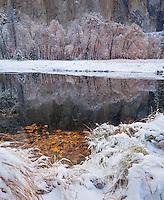 Yosemite National Park, California: Reflections along the Merced River after a snowfall, late fall.