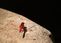 Colorful dragonfly sitting on rock.