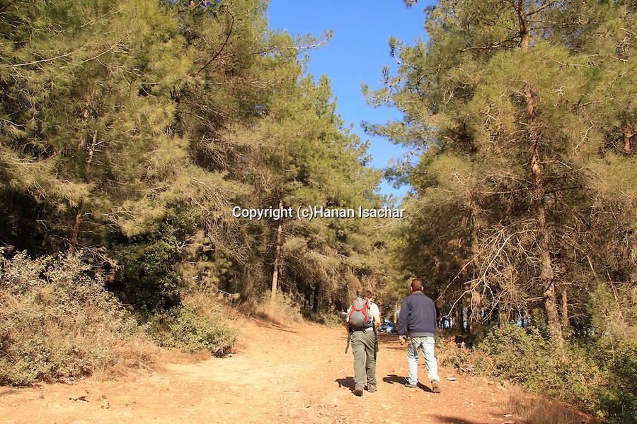 Israel, Mount Carmel, Israel Trail by Druze village Isfiya