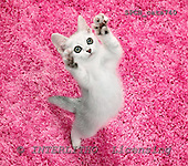 Xavier, ANIMALS, cats, photos+++++,SPCHCATS740,#a# Katzen, gatos