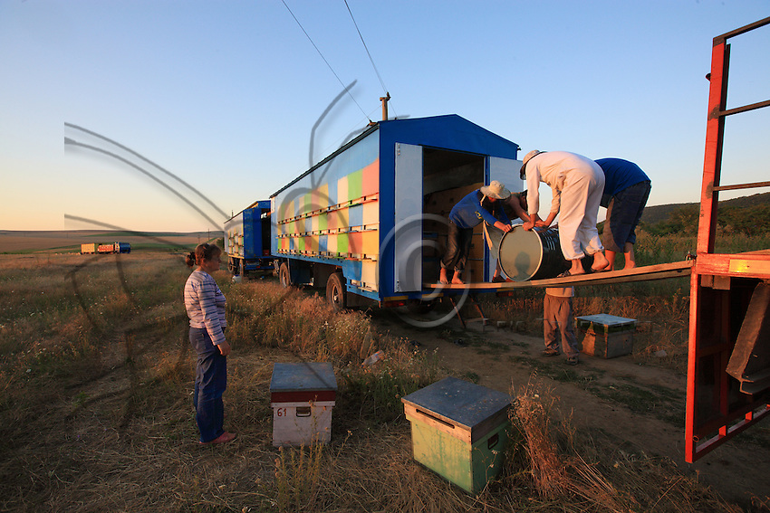 Paolo and Aurélia Balasa: their village of Salcioara is a few kilometers from Babadag. Paolo, son of a beekeeper, is an Adventist. He is 47 years old. He set the record for linden honey production this year with a yield of 25 KG per hive. His truck and trailer hold 130 hives.