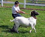 Tyler LaFountaine, 13, of Suffield, tugs with all his might trying to keep control of his goat named Hersey while showing him,   during the annual Hartford County 4H Fair at the Four Town Fair Grounds in Somers, the fair runs through the weekend. (Jim Michaud / Journal Inquirer)