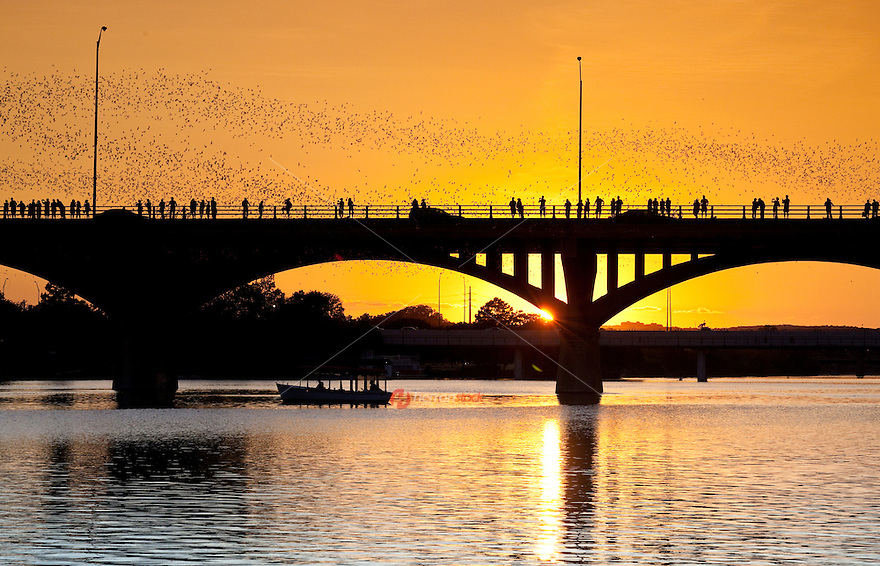 The 1.5 million bats that call Austin's Congress Ave. Bridge home join in with the nightlife as they come out every night at dusk to feed on insects. The bats have been a spectacle for passers by to enjoy, as  a strip of sky turns black as they fly overhead.