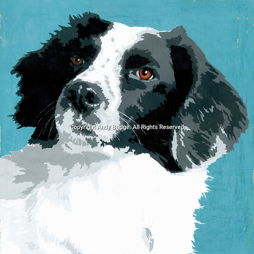 Painting of Border Collie dog