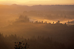 Sunrise overlooking valley with trees and low fog and fields Gresham Oregon