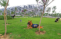 Aug. 8, 2008; Beijing, CHINA; Police dogs sit in the grass outside National Stadium prior to the start of the opening ceremonies for the 2008 Beijing Olympic Games. Mandatory Credit: Mark J. Rebilas-