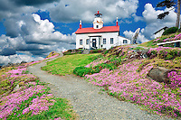 Sedums blooming at Battery Point lighthouse, California A sky has been added