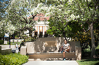 Occidental College student sits and reads on Bell Bench under a flowering tree near the JSC quad, April 8, 2010. (Photo by Marc Campos, Occidental College Photographer)